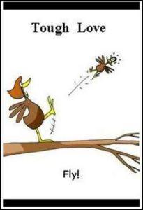 Tough love bird