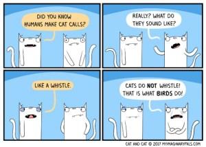 Cat-and-Cat-cat-call-168
